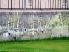 web_gartenmauer_pict0593